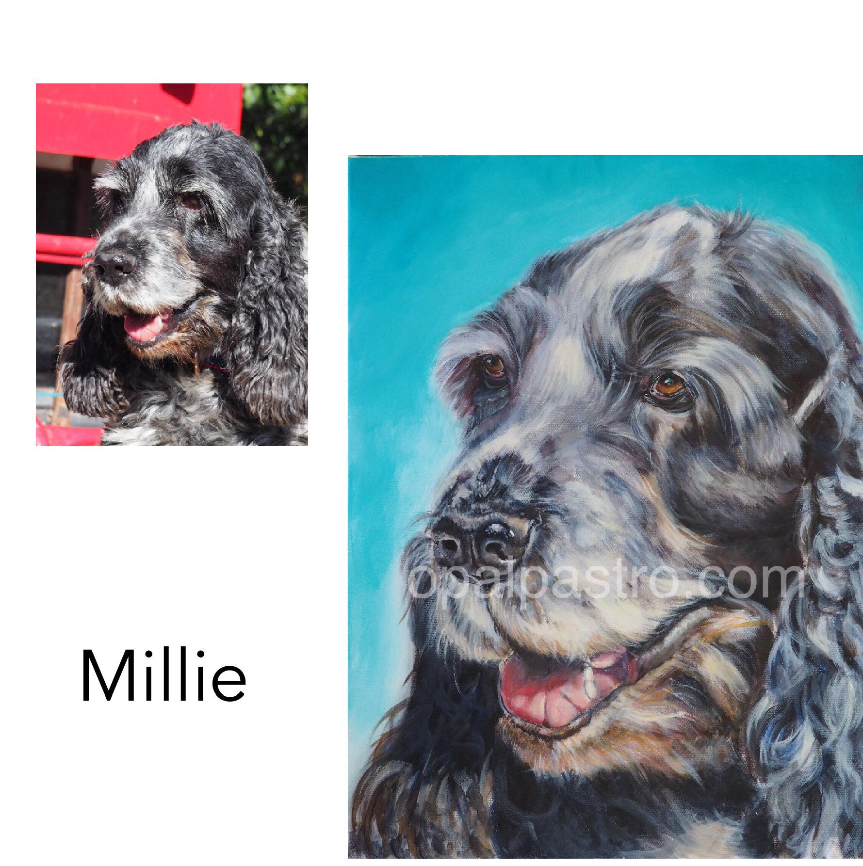 """Cocker Spaniel - Acrylic on Canvas, 12"""" x 16"""" (30.48cm x 40.64cm)Private CommissionPromised Land, NSW—————————————————-Millie is a gentle soul and a truely beautiful girl inside and out. She loves cuddles, swimming in her own private waterhole and…..cuddles."""