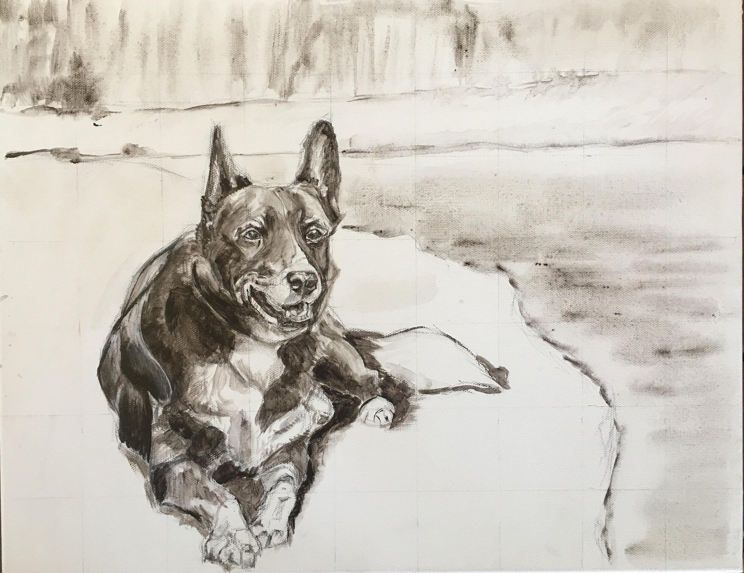 Grisaille under painting of custom dog portrait. Tux the Collie Kelpie mix by Australian pet painter Opal Pastro