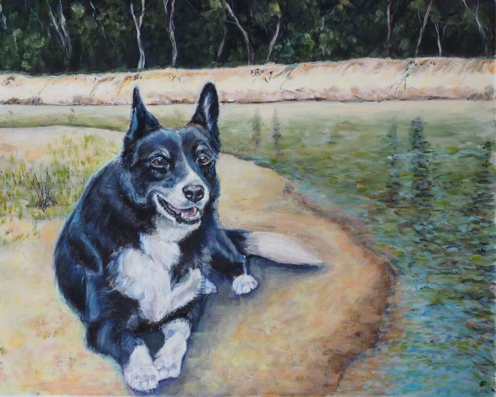 Commissioned dog painting of Tux the Collie Kelpie mix by the Murray River. Painted in Bellingen on the Coffs Coast by Australian pet portrait artist Opal Pastro