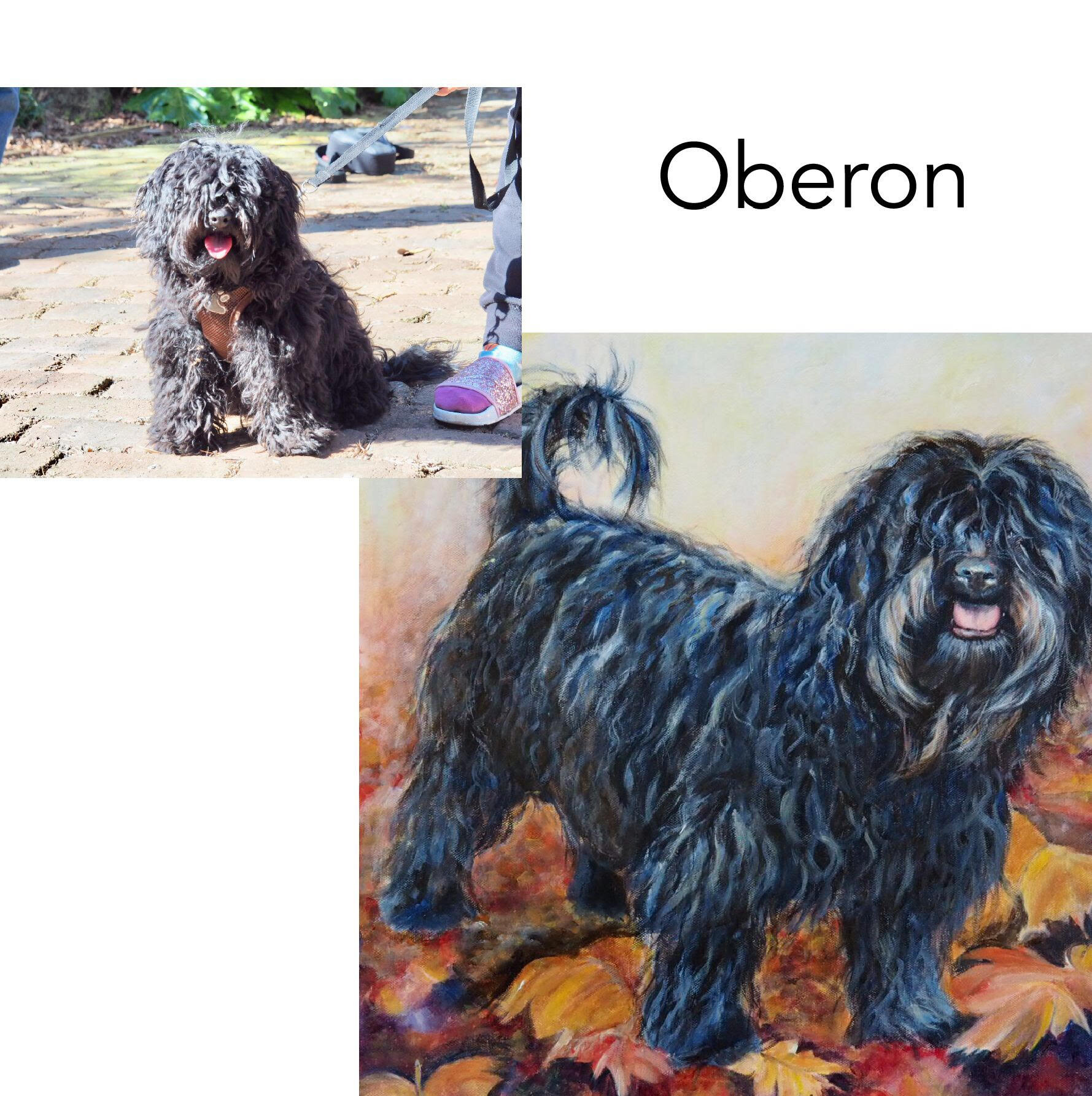 Custom pet portrait from photos of Black Shih-Poo puppy with hair over his eyes standing in Autumn leaves. Hand painted in acrylics by Australian Pet portrait artist Opal Pastro in Bellingen, Coffs Coast, NSW