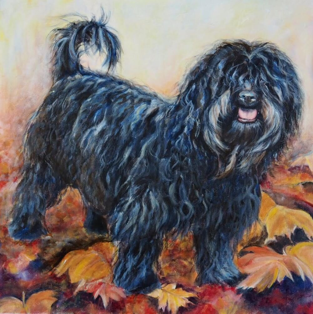 Hand painted custom dog painting of Black Shih-Poo by Australian pet portrait artist, Opal Pastro