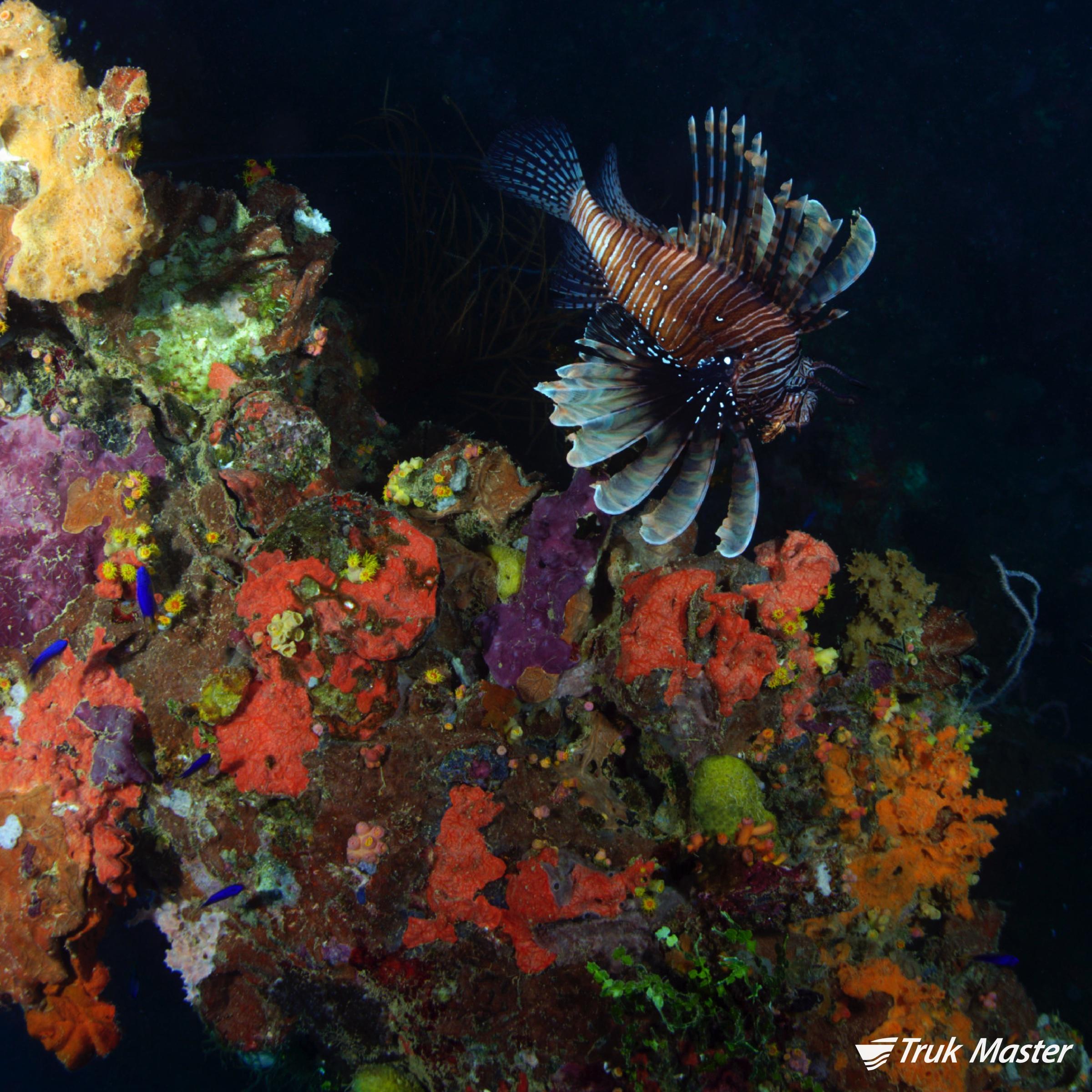 lionfish-yamagiri.jpg