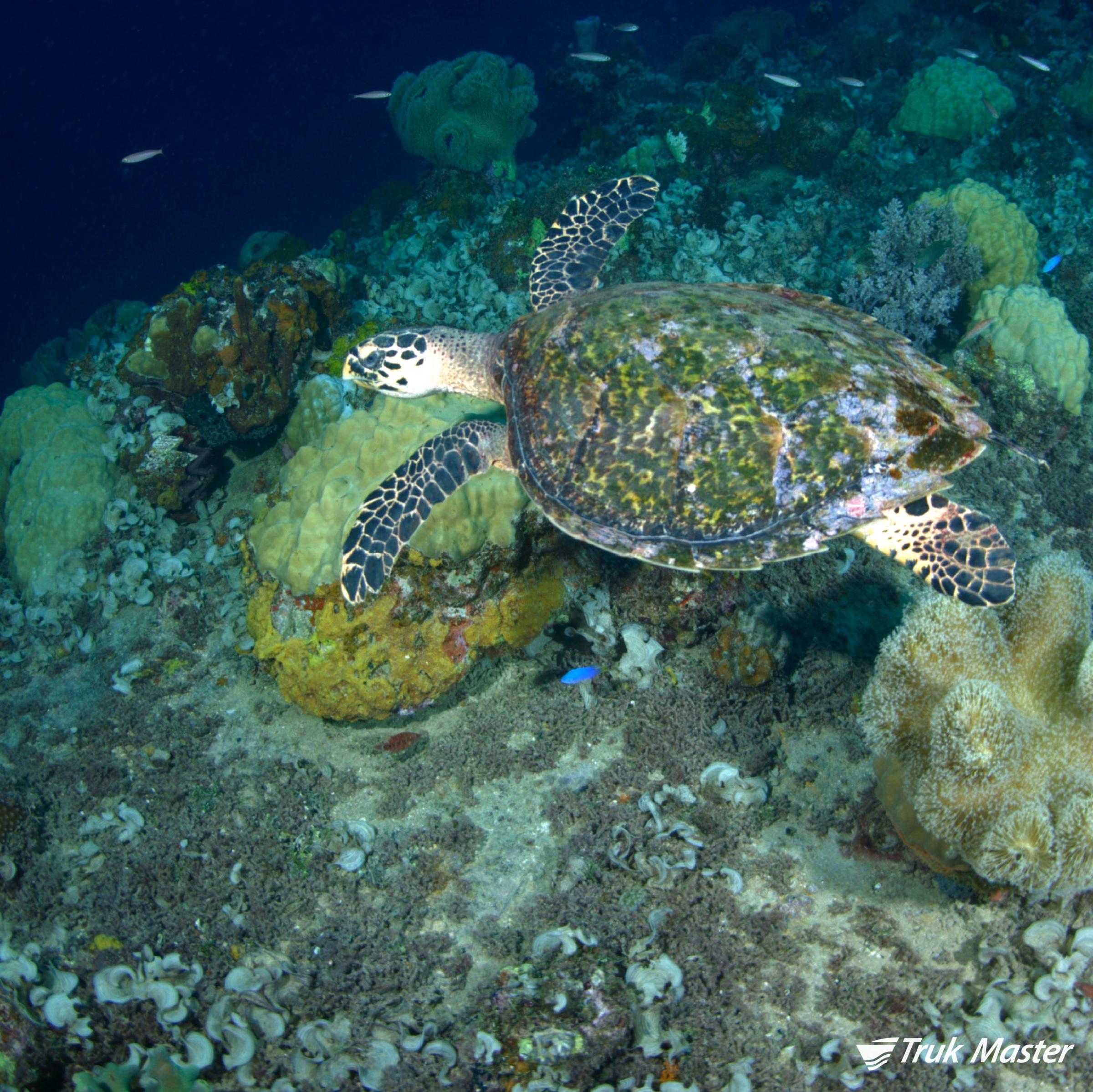 turtle-yamagiri.jpg