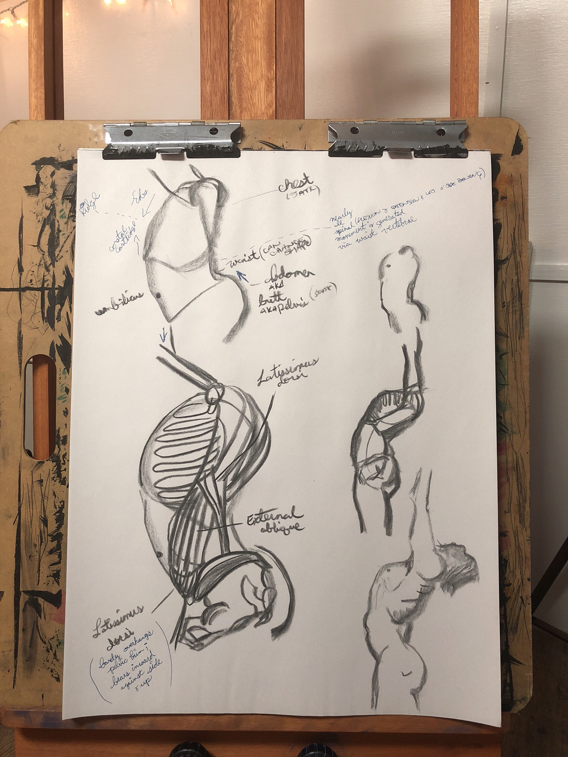 Anatomy study of George Bridgeman's  Constructive Anatomy