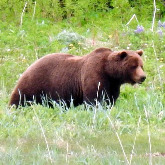 Testimonial_Travel_Alaska_Bear.jpg
