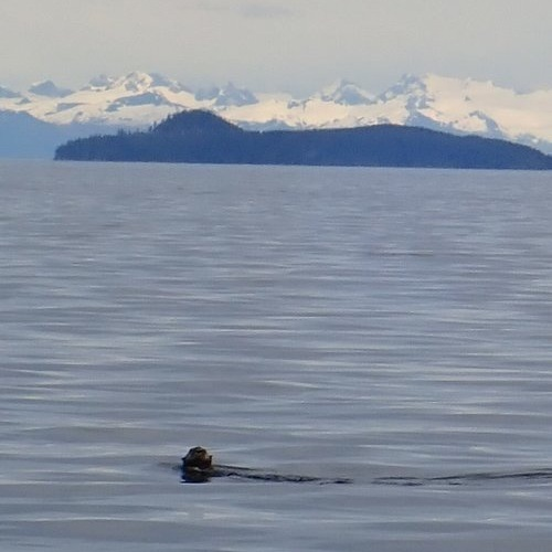 Testimonial_Travel_Alaska_Seal_1.jpg