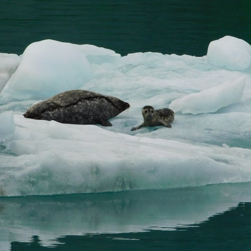 Testimonial_Travel_Alaska_Seal_2.jpg