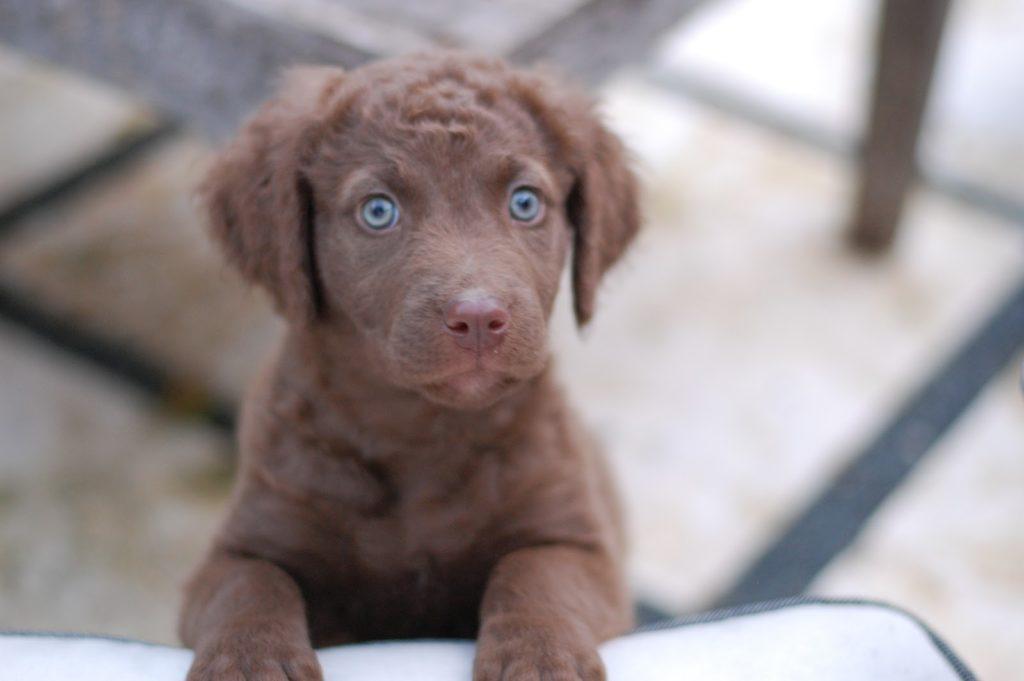 puppy-meditation-mindfullness- learn-how-to-meditate-elizabeth-irvine-truewellbeing.jpg