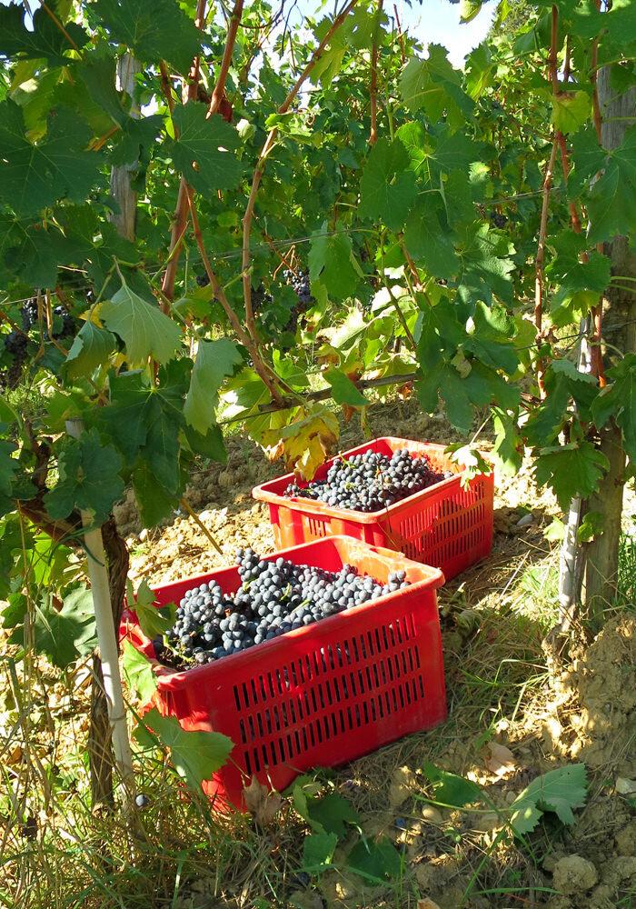 Vineyards_06-min.jpg