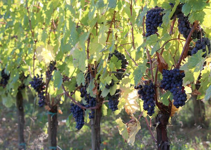 Vineyards_09-min.jpg
