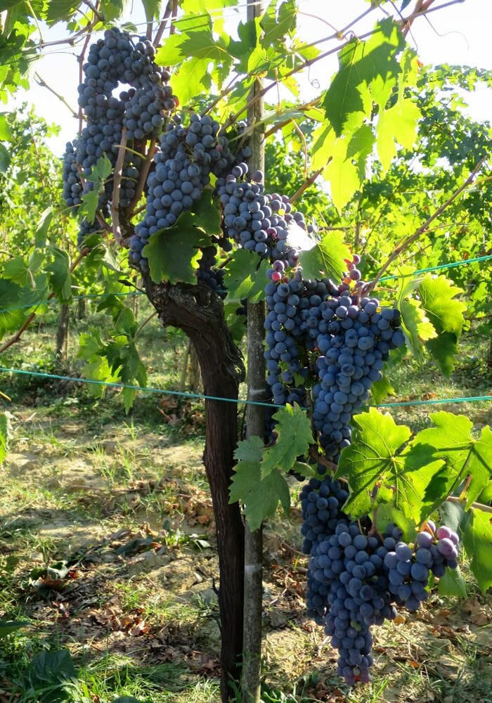 Vineyards_14-min.jpg