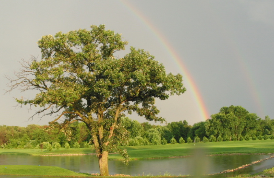 wedding-rainbow.png