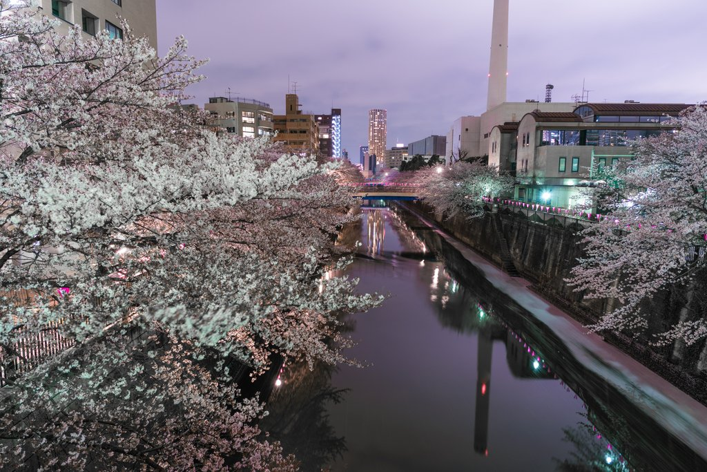 Meguro River by night, one of the more peaceful spots to view the lighted cherry blossoms.