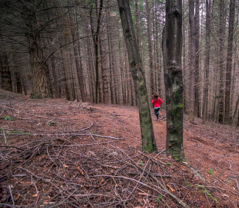 moose+on+a+pine+trail+(1+of+1).jpg