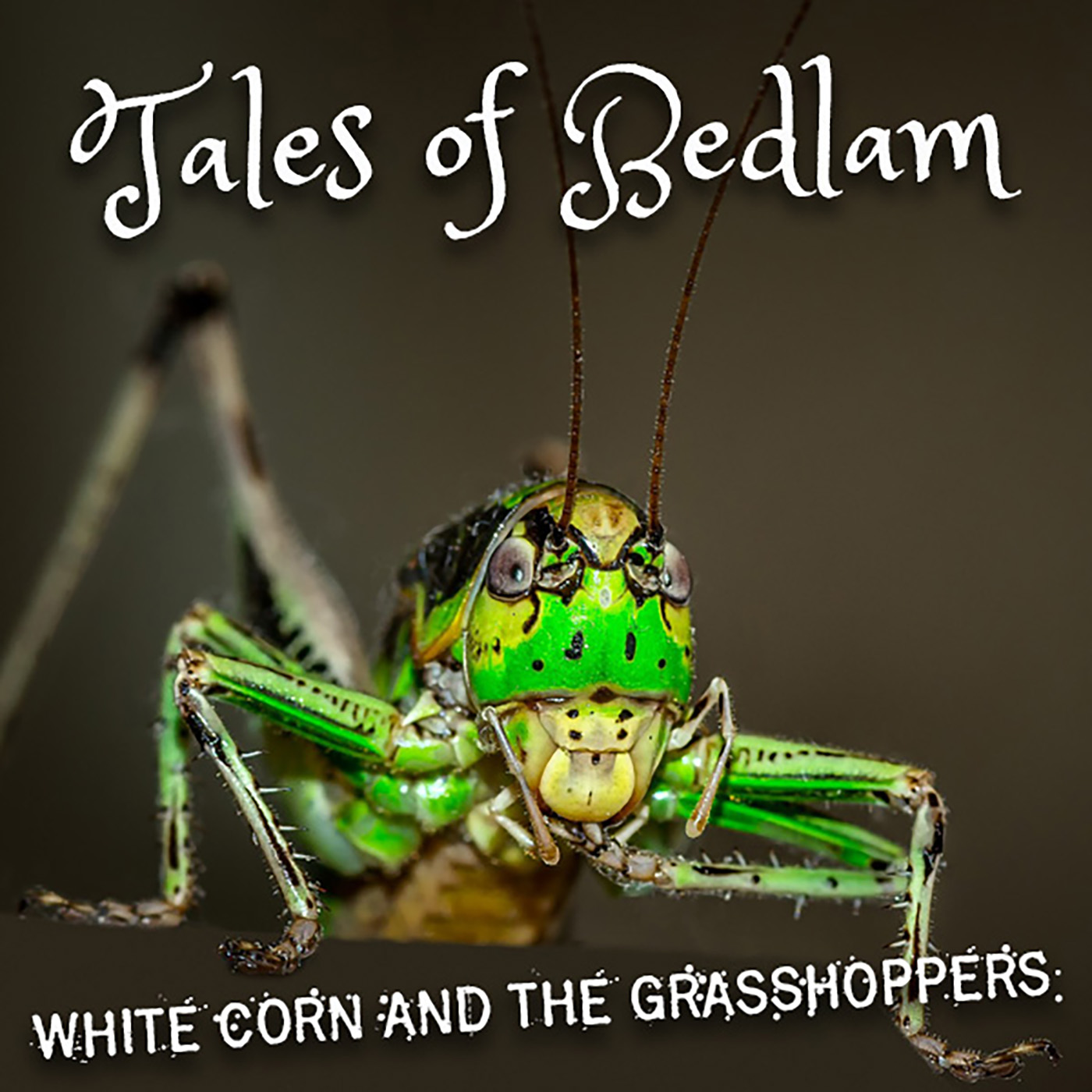 white_corn_and_the_grasshoppers_58.jpg
