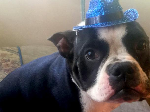 dog-adopt.jpg