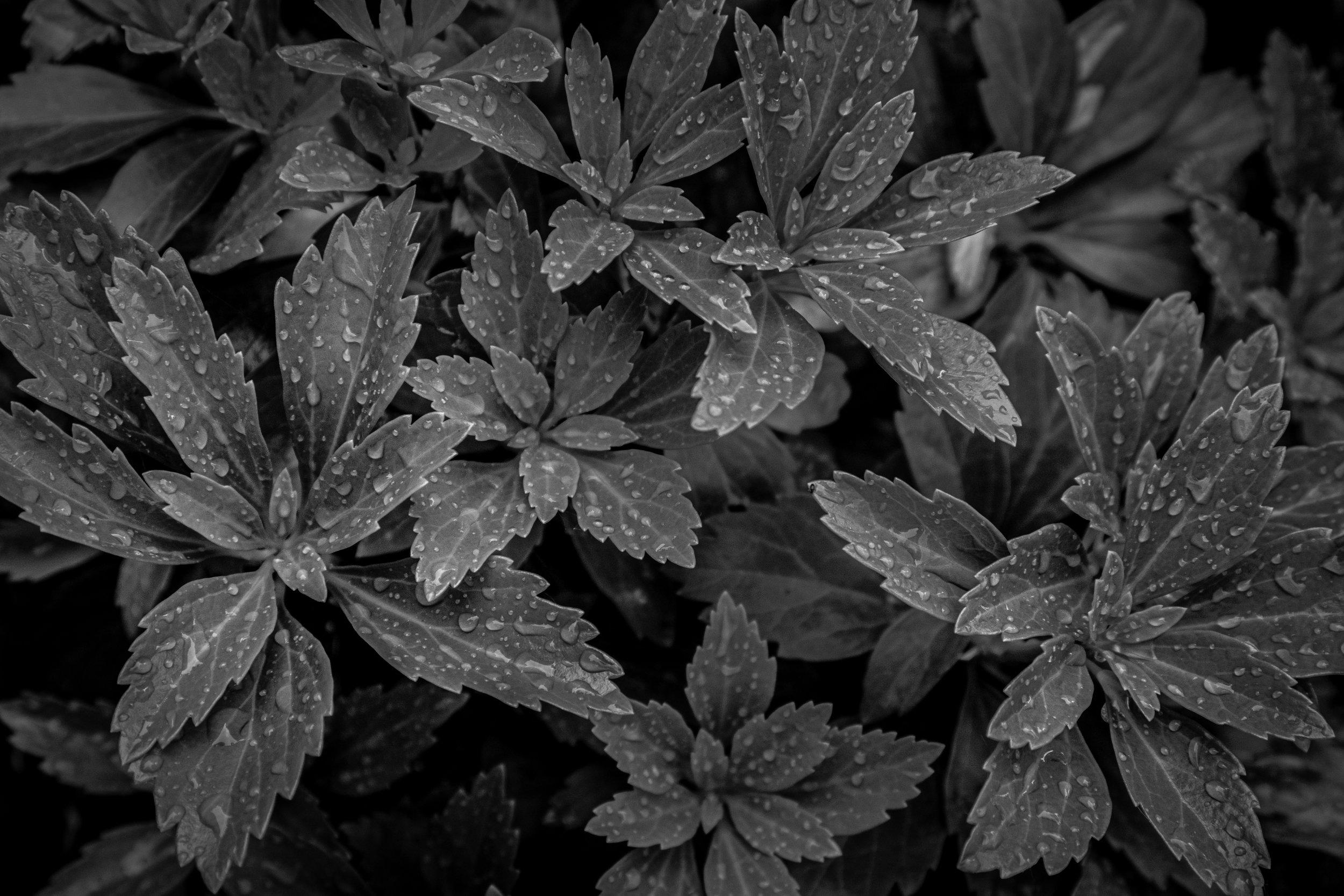 06-15-19-waterfall-foliage-woods (3 of 10).jpg