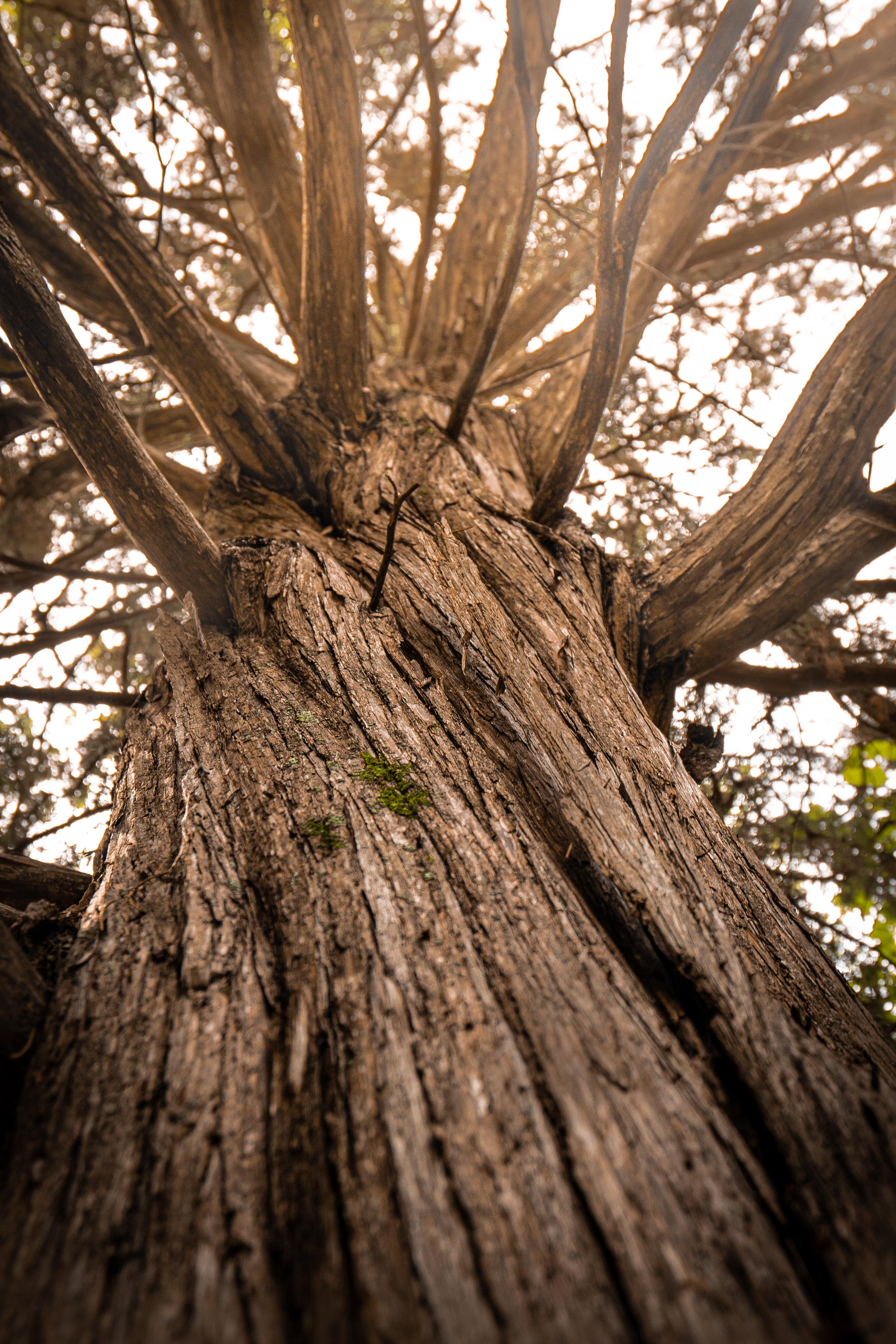 08-13-19-Intern Tree Trek Selections-6.jpg