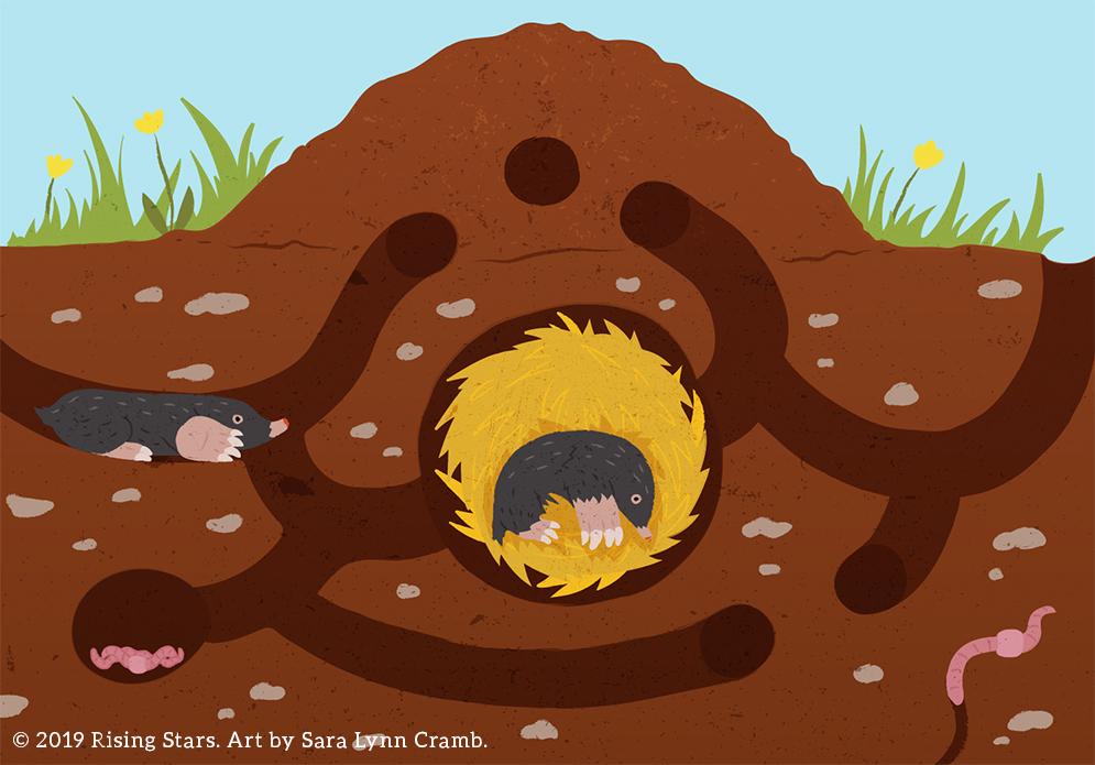 Mole Burrow