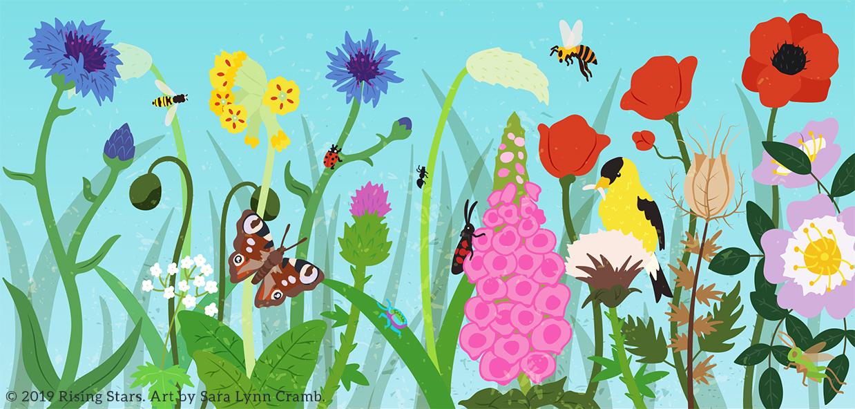 Wildflowers and Pollinators