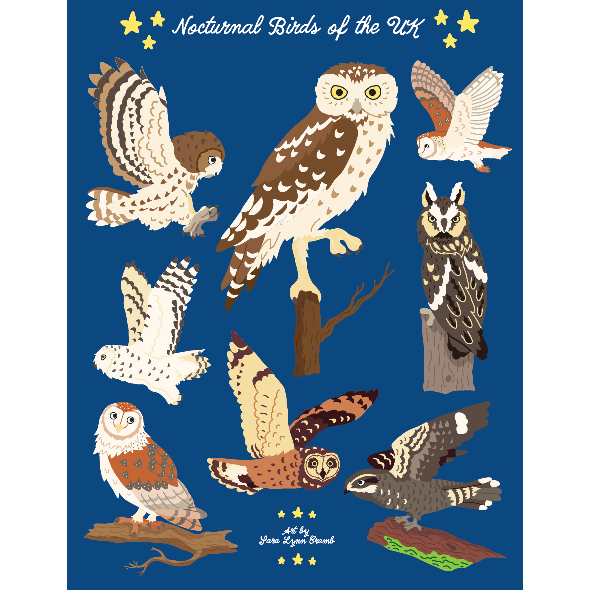 Nocturnal Birds