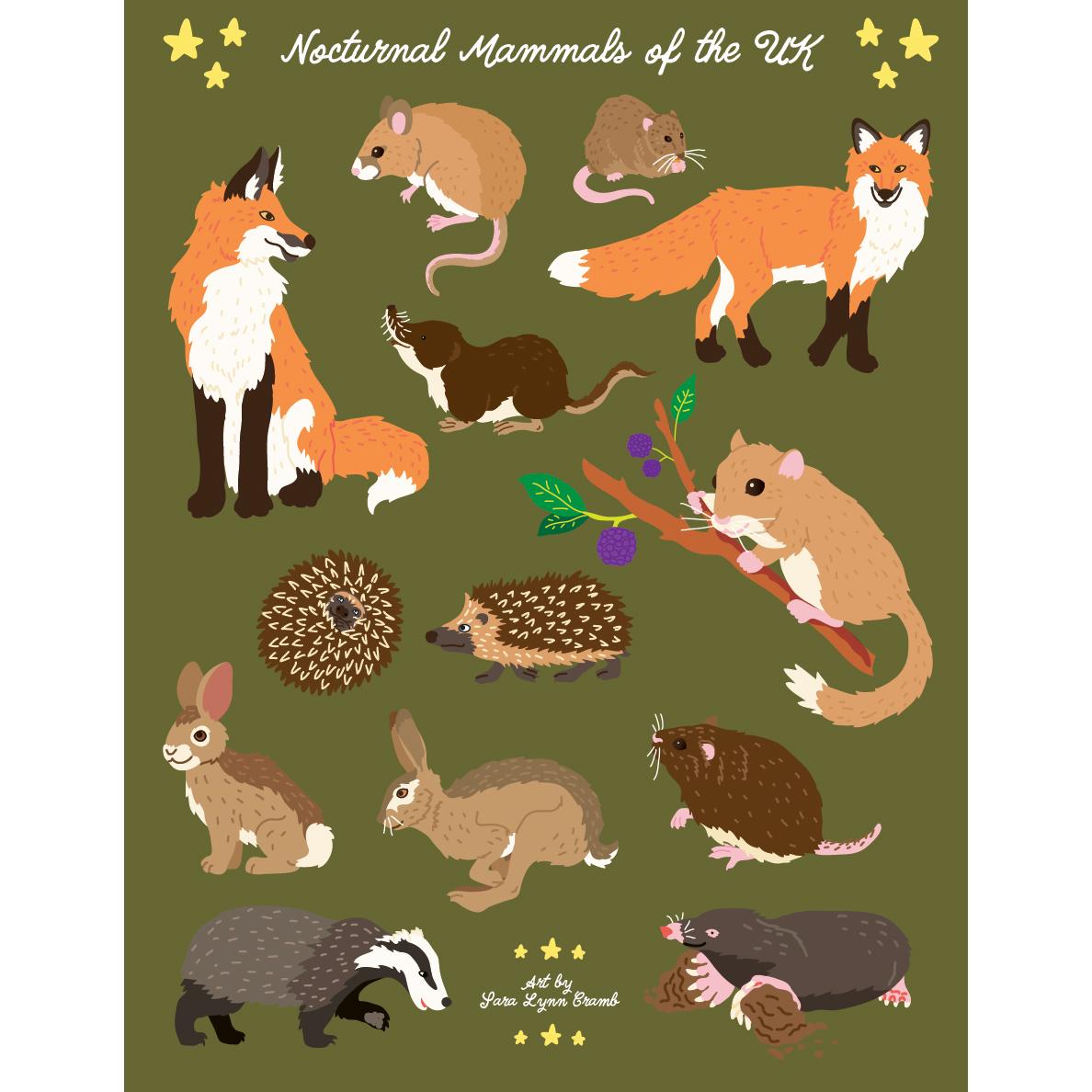 Nocturnal Mammals