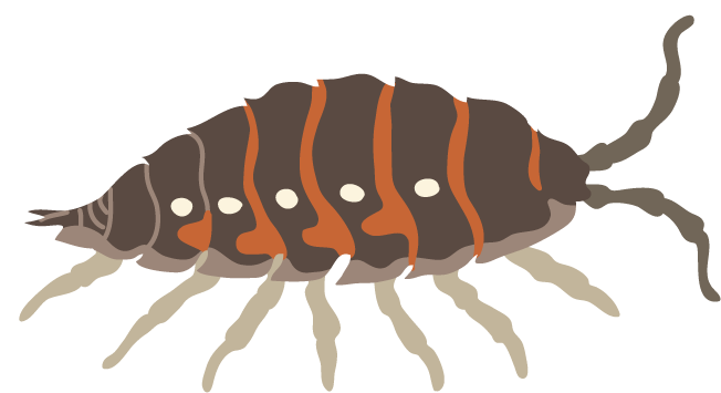 pill bug.png