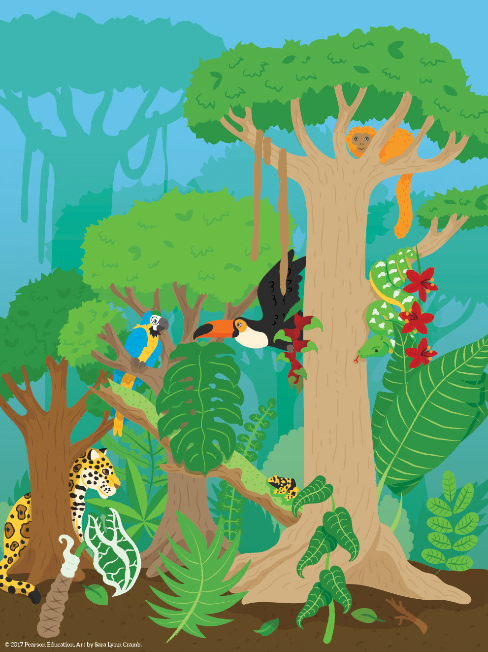 Pearson Education rainforest illustration