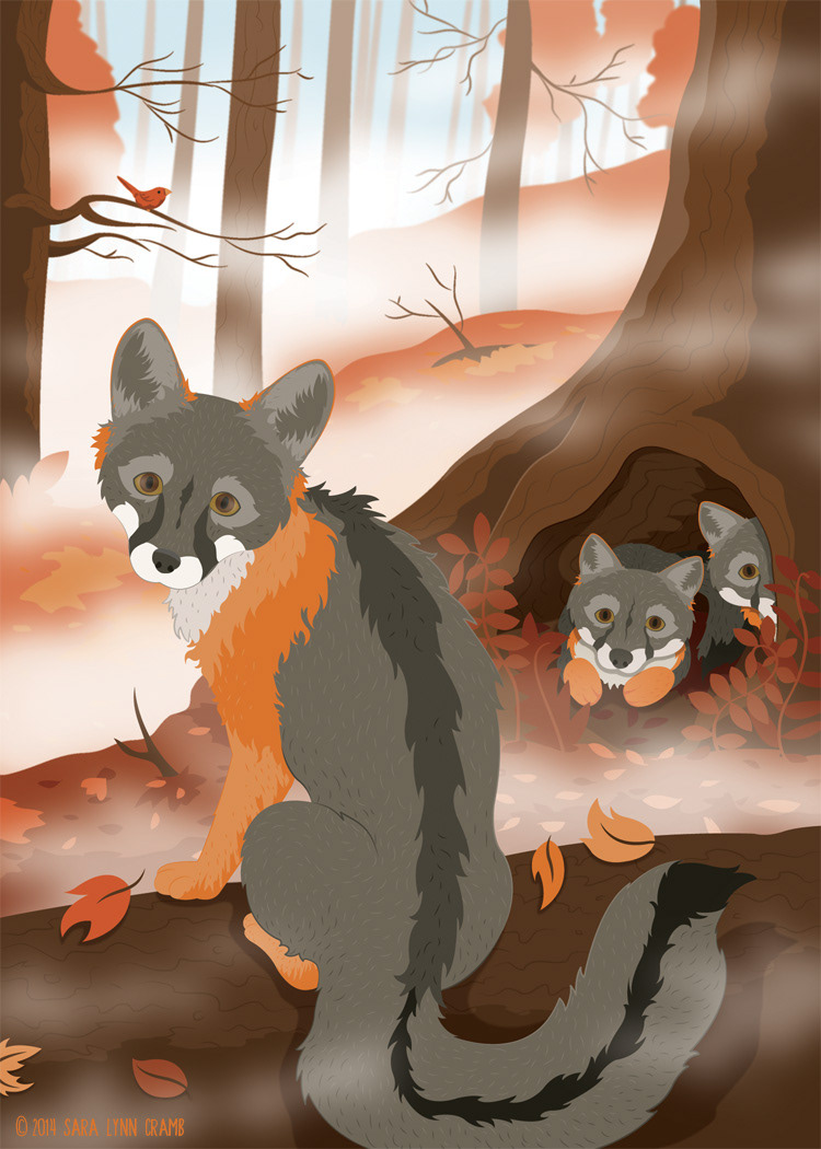 Grey Fox Family in the Autumn Woods