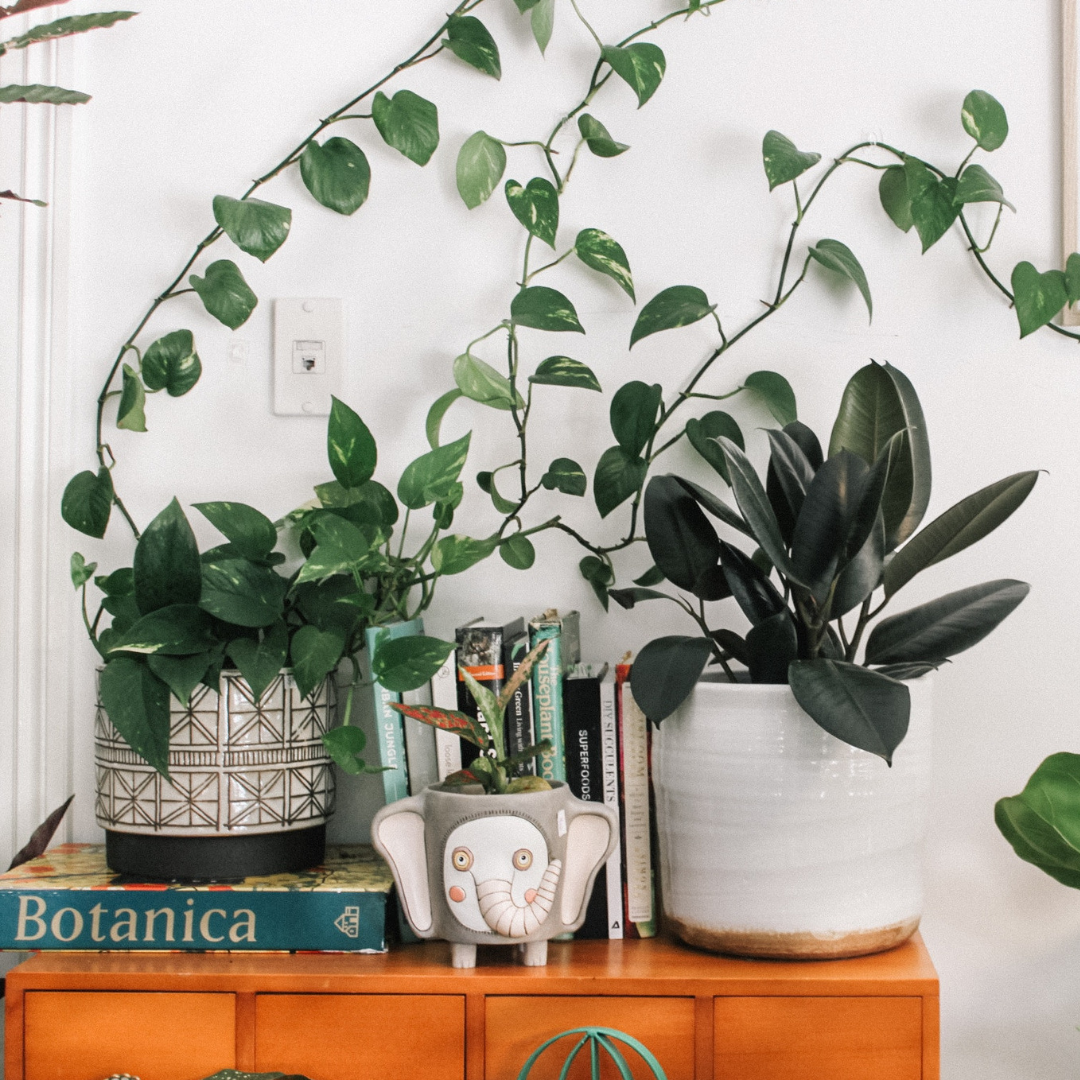 JOIN THE DECORATE IT TRIBE WAITLIST -