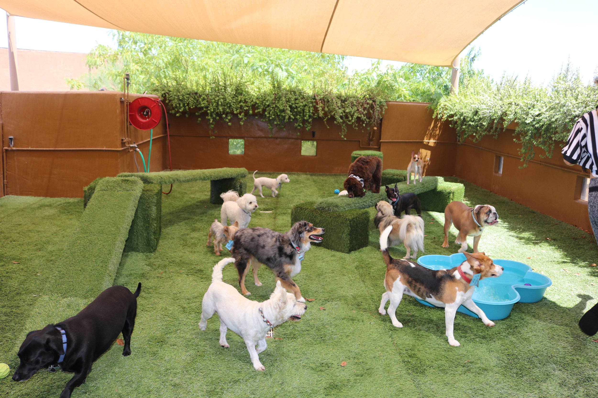 small-dogs-daycare-dog-boarding-pool-cageless7.jpg