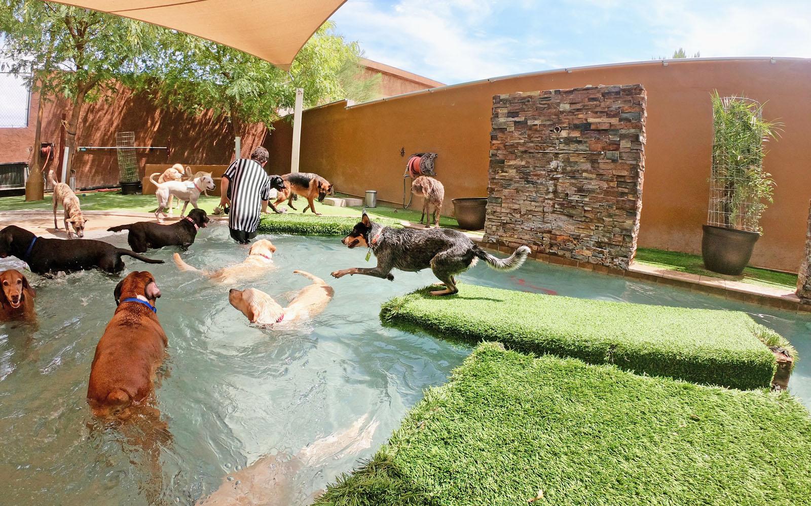 Pool Floaties -