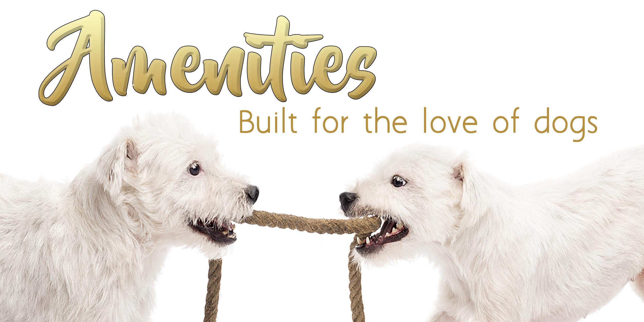 amentities-a-best-pet-resort-dog-sitter-training.jpg