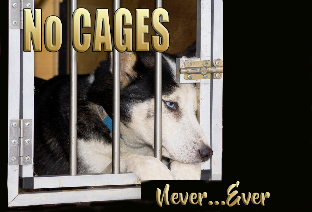 no cages ever never 1 .jpg