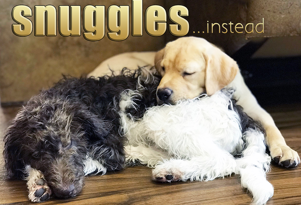 small-size-snuggles-no-cages-daycare-and-boarding.jpg