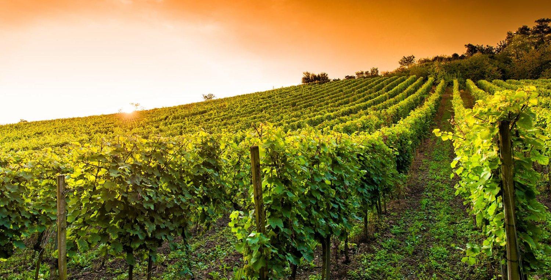 vineyard-05.jpg