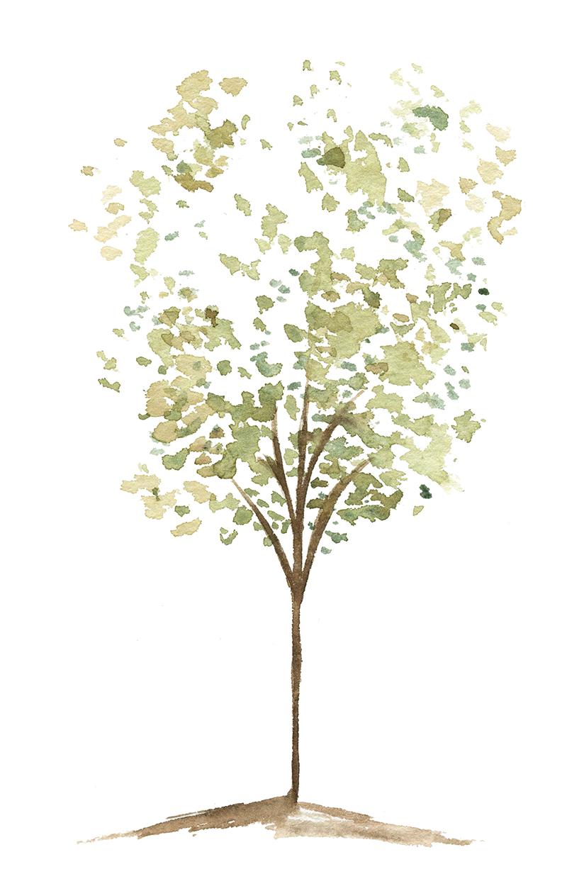 sparse tree web.jpg