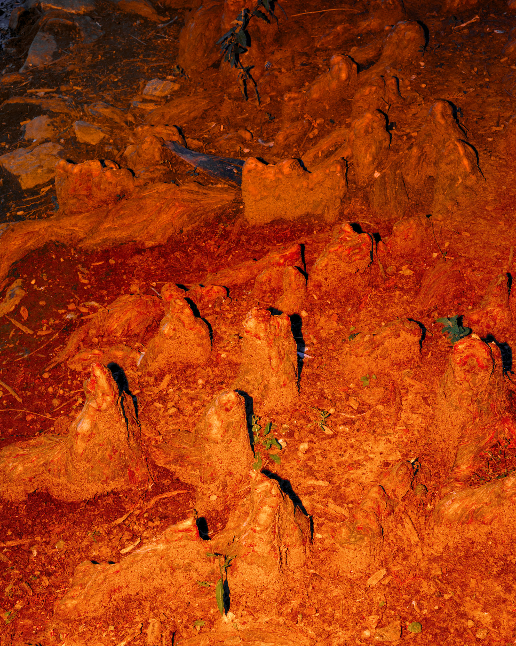 Red Earth with Tree Stumps