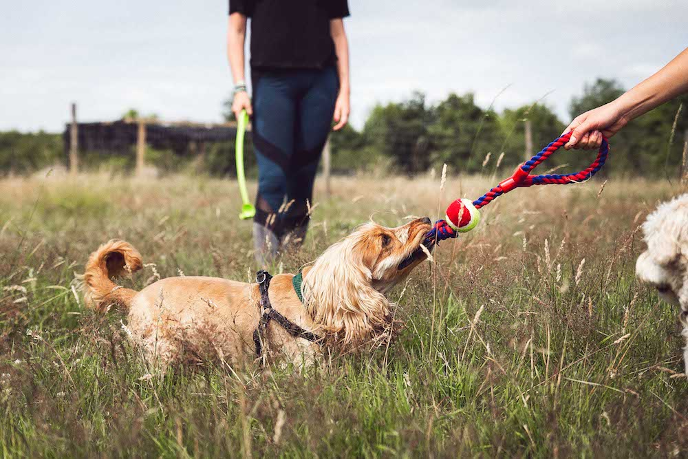 FREE PLAY AND FETCH -