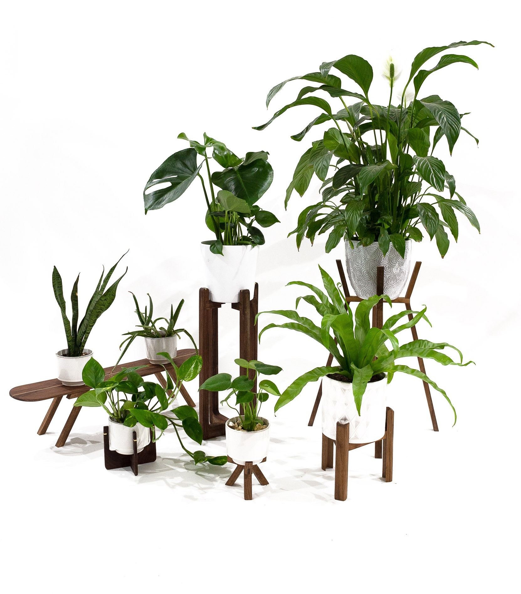 ELEVATE YOUR PLANT-LIFE -