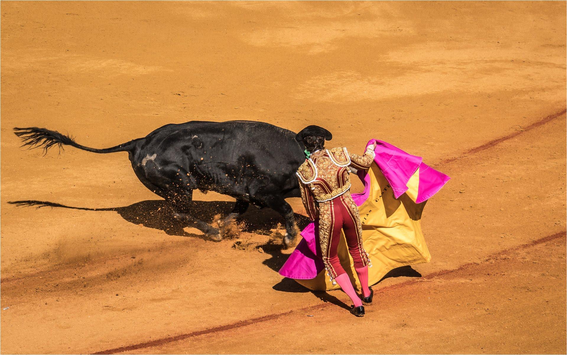 Bull Fight Seville Spain.jpg