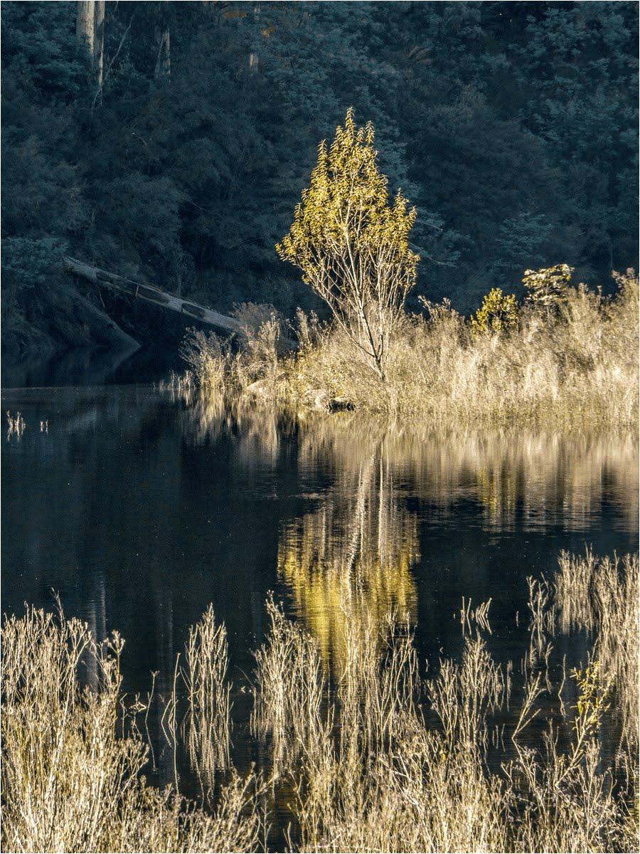 Lake Guy Bogong Village VIC.jpg