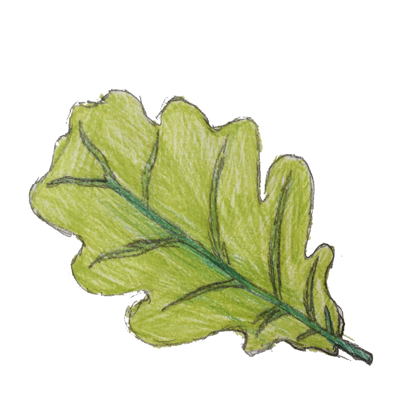 Nursery - Oak