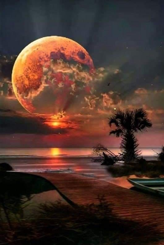 Proxima B Terra #7