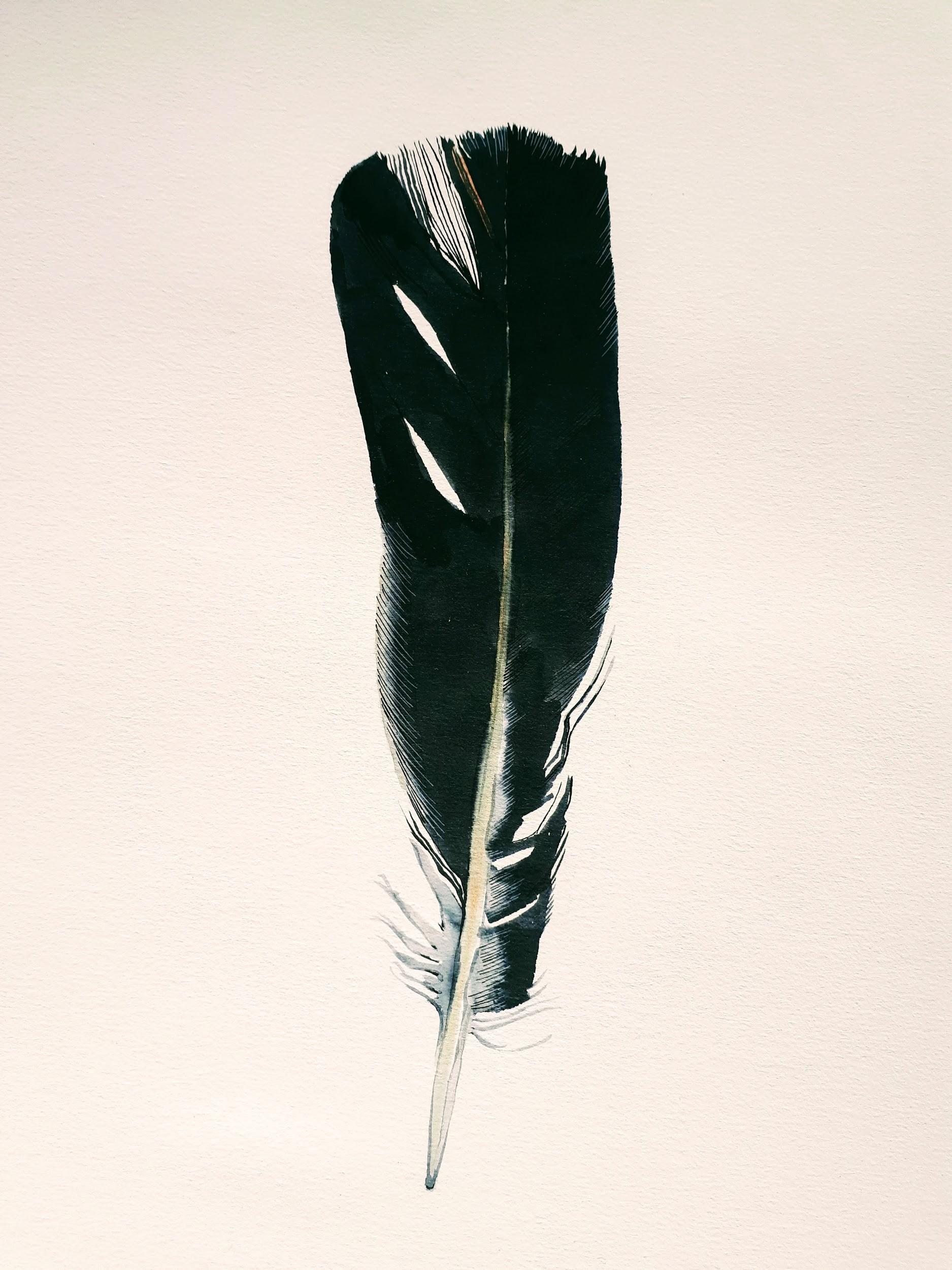 A feather that breaks like paper on the floor    © Juan Eduardo Páez Cañas