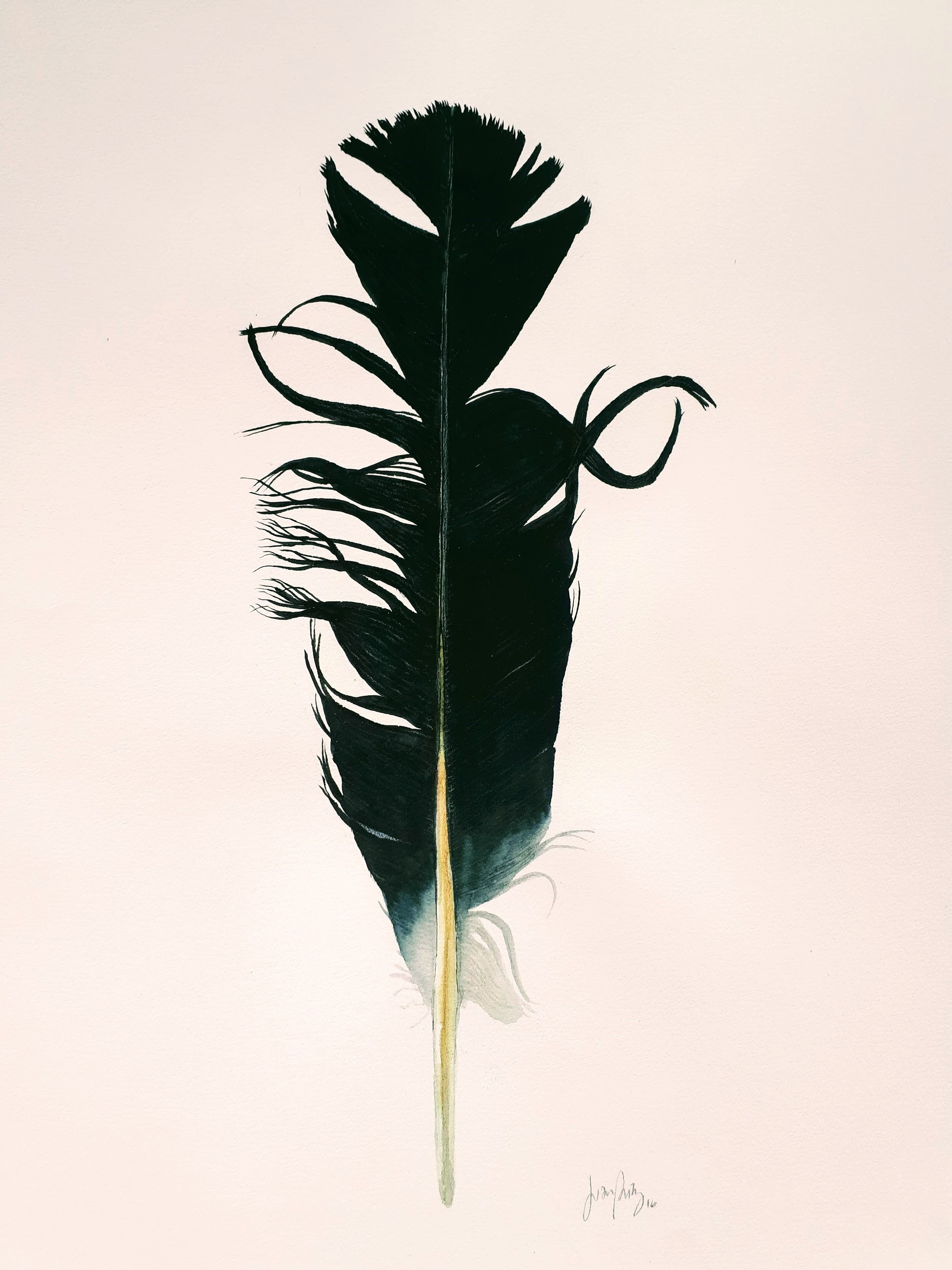 A feather that looks like a capital letter    © Juan Eduardo Páez Cañas