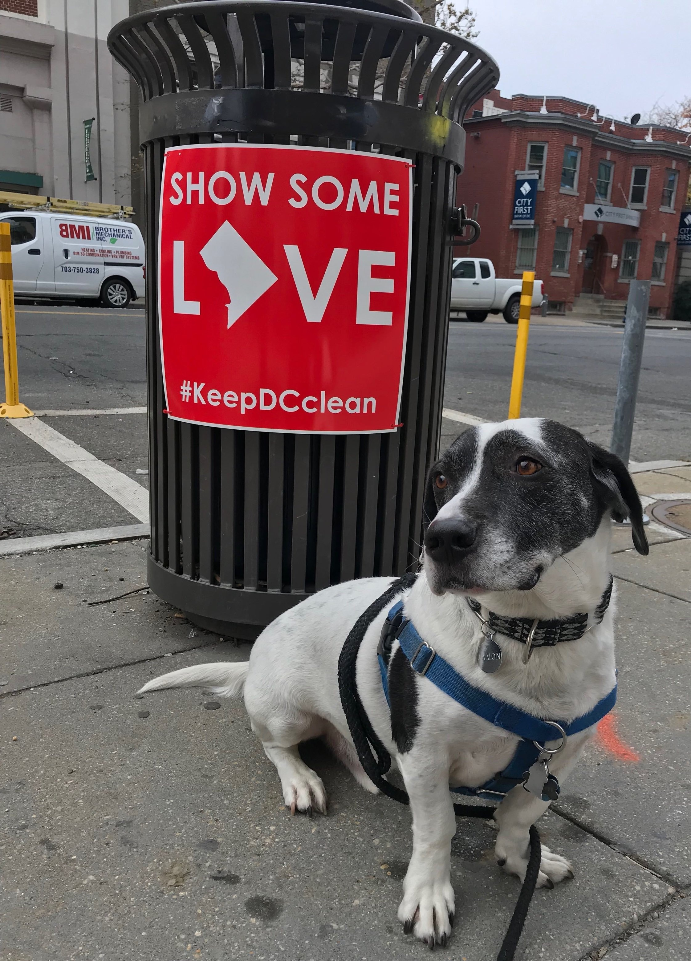 A Lab staff member's dog poses with a behaviorally informed Smart Can sign. (Credit: The Lab @ DC)