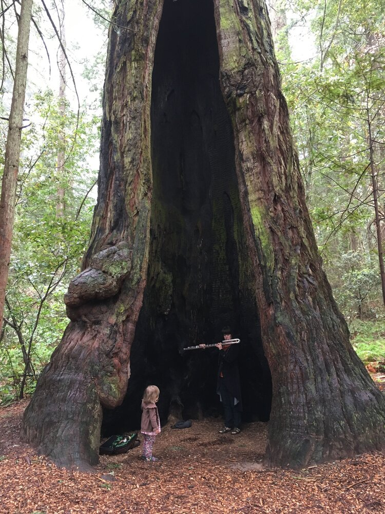 Elsa Nilsson, Jon Cowherd and Chris Morrissey play music for Redwood Trees