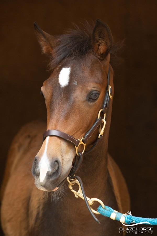 Photo by  Blaze Horse Photography .