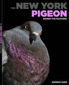 The New York Pigeon: Behind the Feathers  By Andrew Garn powerHouse Books 2018 143 pages
